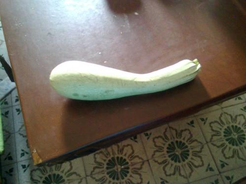 Zucchina.jpg